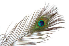 Feather 2. Colorful peacock feather abstract background Stock Photo