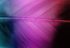 Feather. Macro shot of a feather with a colorful gradient Royalty Free Stock Photography