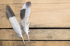 Feather. The black and white feather on the rough wood board Stock Photo