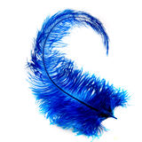 Feather. A blue feather on a white background Royalty Free Stock Images