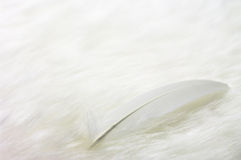 Feather. On white fake fur Stock Image