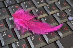 Feather. Red feather on the laptop keyboard Royalty Free Stock Image