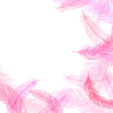 Feather. No background illustration of pink feathers Royalty Free Illustration
