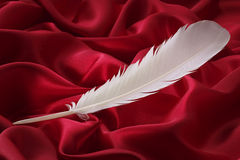 Feather. White feather on red silk Royalty Free Stock Images