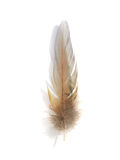 Feather 3 Royalty Free Stock Photo