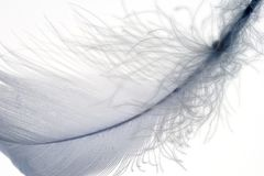 Feather 3 Royalty Free Stock Photos