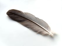 Feather. On white Royalty Free Stock Photography
