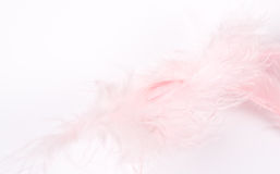 Feather. Feather on the white background Stock Image