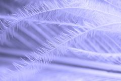Feather Royalty Free Stock Image