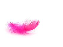 Free Feather Stock Images - 3993104