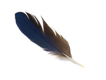Free Feather 4 Royalty Free Stock Photo - 13443745