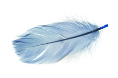 Free Feather Royalty Free Stock Photography - 40619227