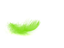 Feather. Single green feather over white background Stock Photos