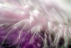 Feather. Close up , soft focus Stock Photos