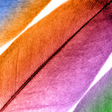 Feather. Larger picture of feather coloured Stock Images