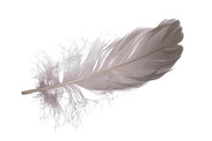 Feather. Bird feather isolate on white Stock Photo