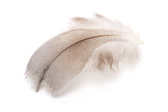 Feather. Close up of a bird feather on white background Royalty Free Stock Photography