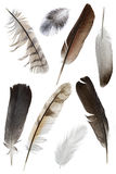 Feather. A collection of bird feathers on white Stock Photos