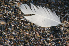 Feather. Lone feather on sandy beach Stock Images