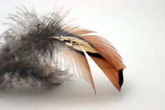 Feather. Red Feather Royalty Free Stock Photos
