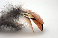 Feather Royalty Free Stock Photos