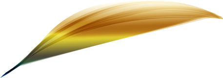 Feather. A feather from a tropical bird Royalty Free Stock Image