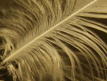 Feather. Close-up of two white feather stock image