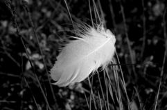 Feather. Caught in the grass stock photography