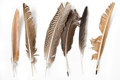 Feather. Background with  colorful feathers for Royalty Free Stock Photos