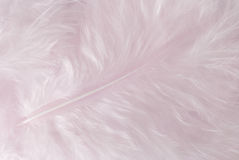 Feather. Light pink feather background close up full frame Royalty Free Stock Image
