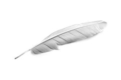 Feather. Bird feather on white background royalty free stock images