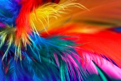 Feather Abstract 1. Closeup of multi colored feathers Royalty Free Stock Photo
