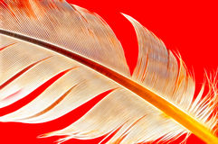 Feather Abstract. Details of a feather with red background royalty free stock image