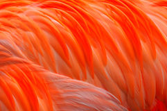 Flamingo feather Abstract Stock Photo