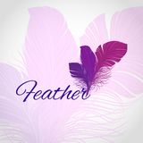 Feather Abstract Background Royalty Free Stock Photos