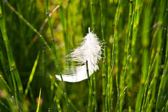 Feather against green grass background Royalty Free Stock Images