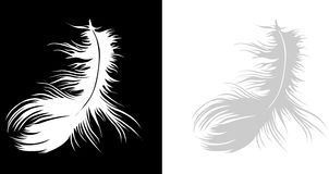 A feather alone. Single white feather on black background and on white background stock illustration