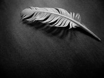 A Feather Alone. Single white feather of peace on dark background