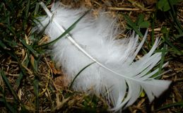 Feather Alone stock photography