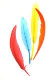 Feather Arrangement Royalty Free Stock Images