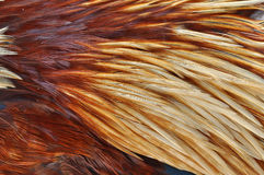 Feather background. Very closeup shot of feather background Stock Photos