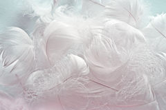 Feather background Stock Image