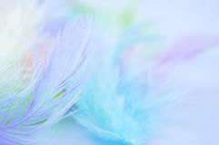 Feather background. Background for design with soft colorfull feathers Stock Photos
