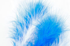 Feather Background Stock Photos