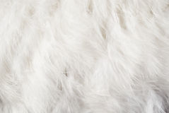 Feather background. Solid white feather background for art design Royalty Free Stock Photography