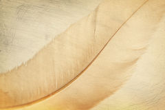 Feather background Royalty Free Stock Photography