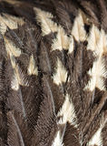 Feather background. Ostrich feather background in brown tones Stock Photography