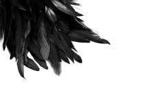 Free Feather Background Stock Image - 46873181