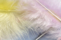 Feather background, close up Royalty Free Stock Photos