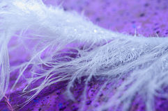 Feather on background. Macro Stock Images